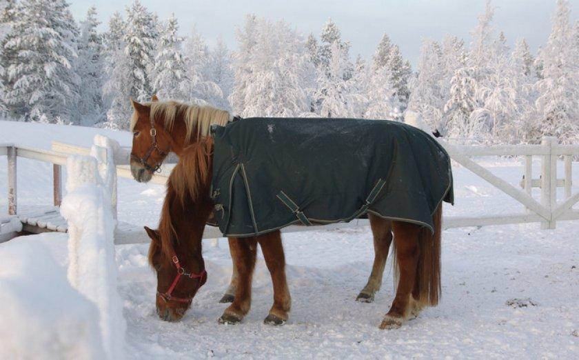 Содержание лошадей зимой