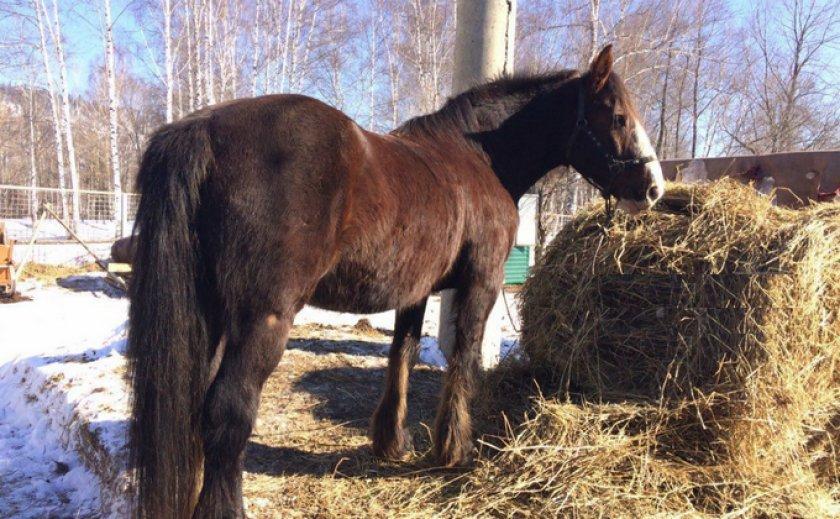 Питание лошадей зимой
