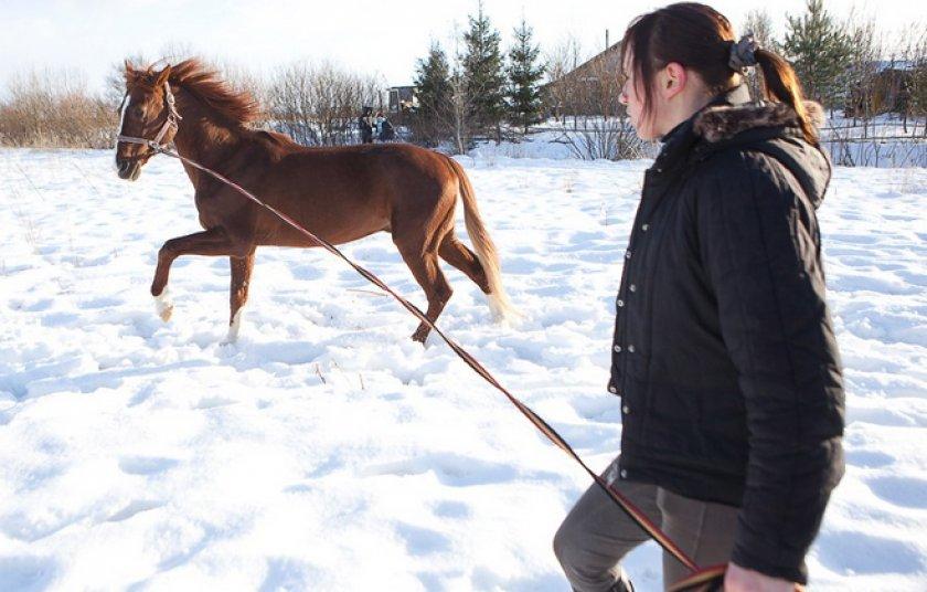 Выгул лошади зимой