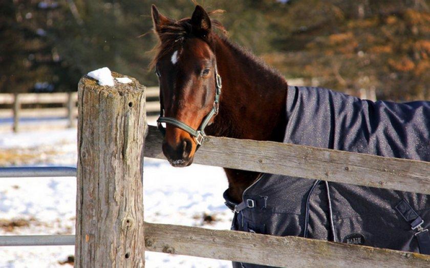 Содержание лошади зимой