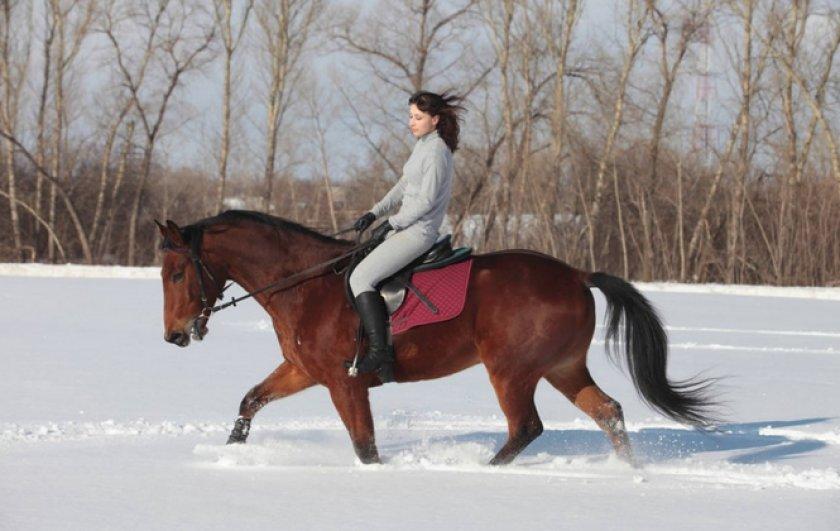 Езда на лошади зимой