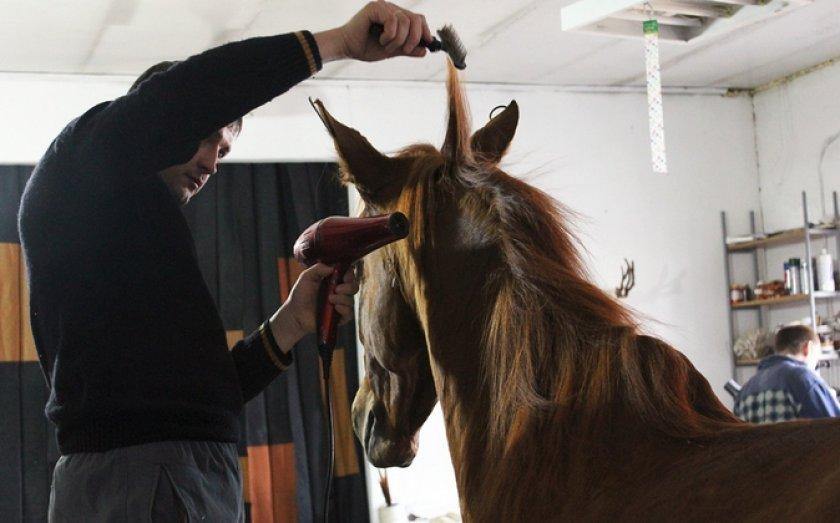 Высушивание шерсти лошади