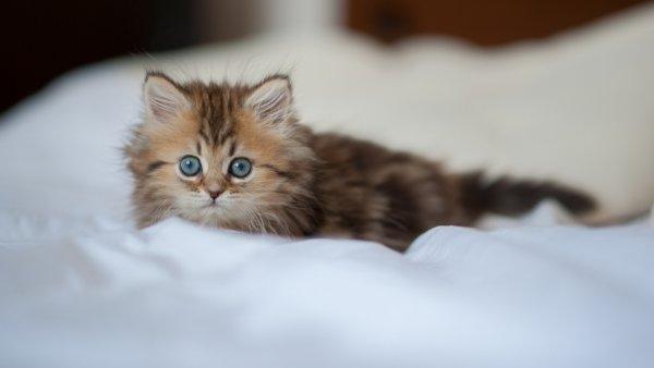 Подробная инструкция по применению канефрона для кошек