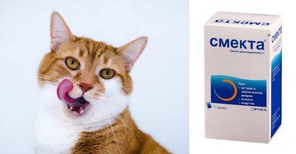 Можно ли кошке давать смекту. Смекта для кошек и собак Смекта для котят при поносе дозировка