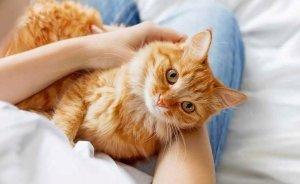 Как давать «Энтеросгель» для кошек