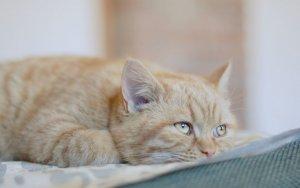 Фуразолидон можно ли котятам