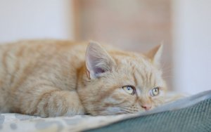 Особенности препарата Фуразолидон для кошек
