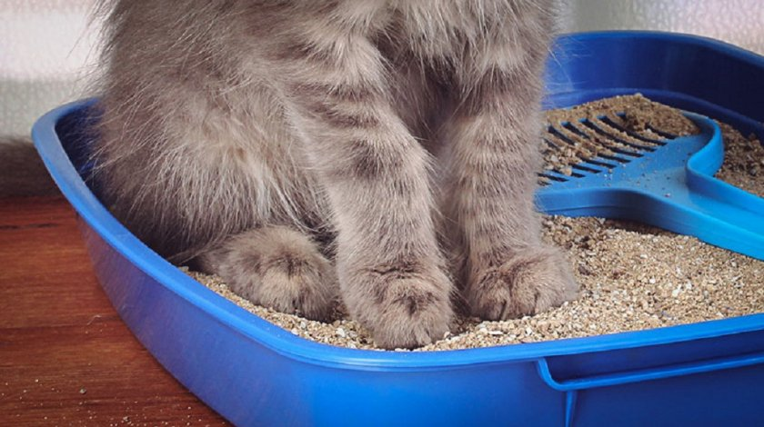 Показания к применению препарата для кошек