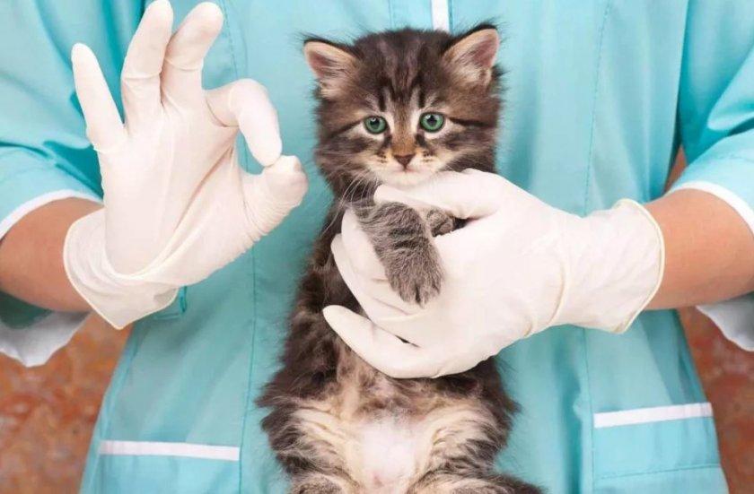 Папаверин для кошек