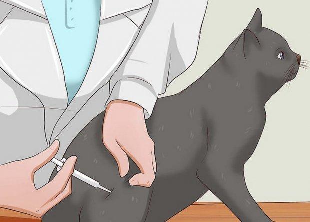 Введение препарата инъекционно