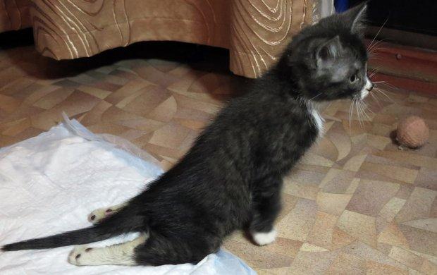 Паралич задних конечностей котенка