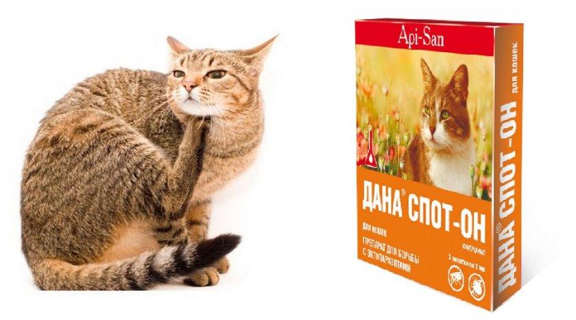 Препарат Дана Спот Он для кошек