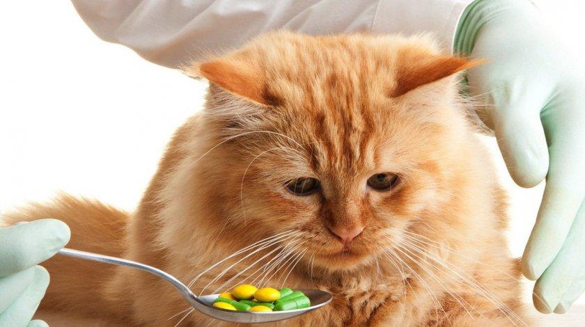 Прием препараторов кошкой