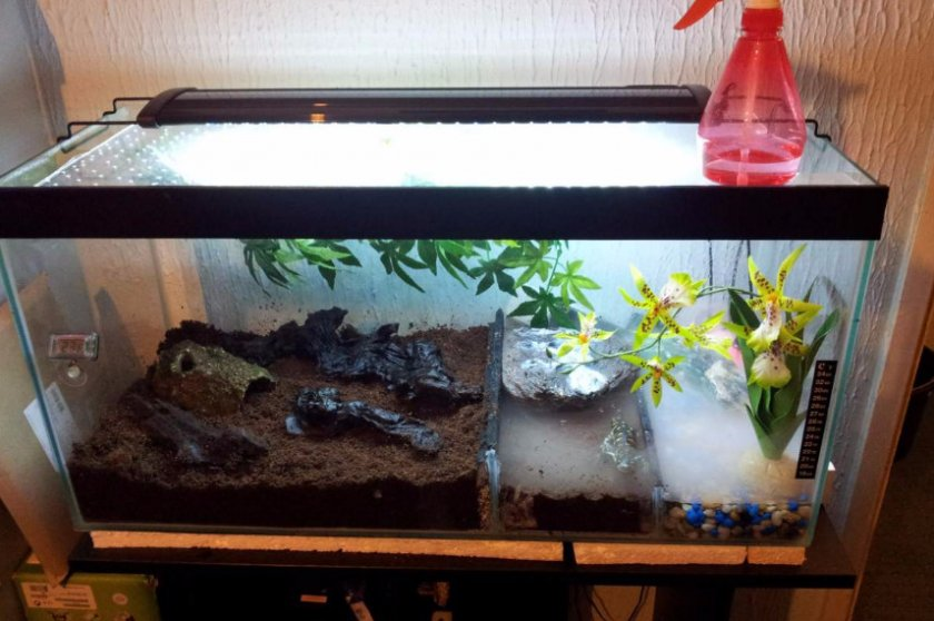 Уход за саламандрой