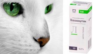 «Левомицетин» для кошек
