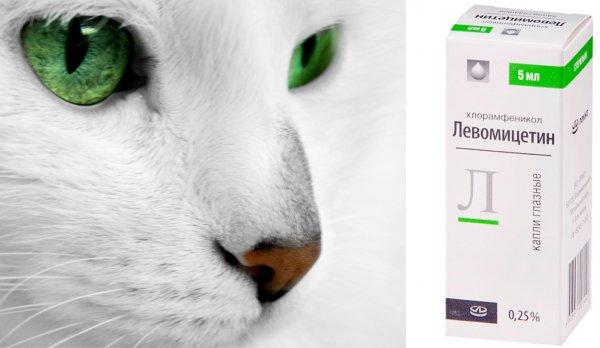 Конъюнктивит у кошки капли левомицетин