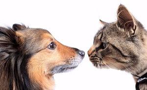 Аспергиллез у кошек и собак