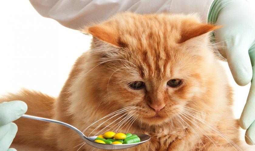 Коту дают таблетки