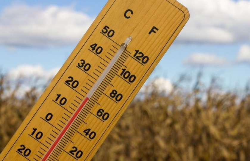 Комфортная температура для шиншилл