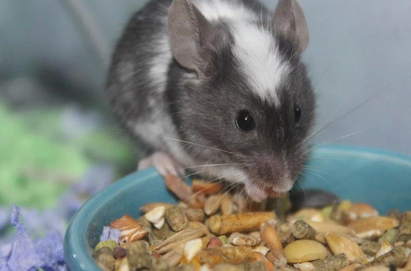 Питание для мыши