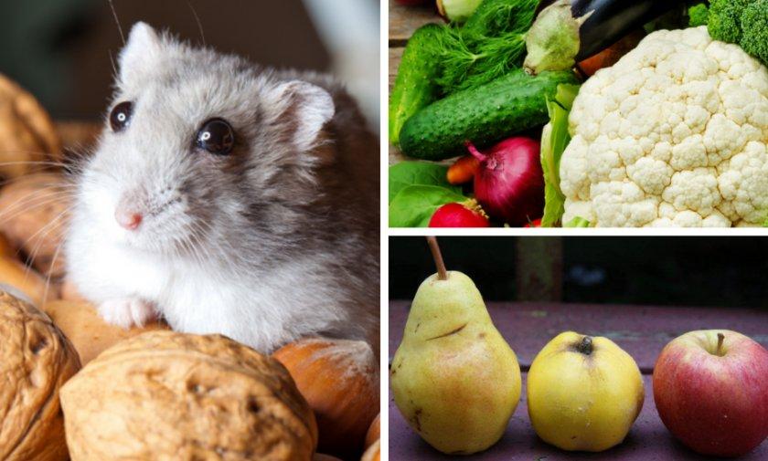 Питание для мыши в домашних условиях