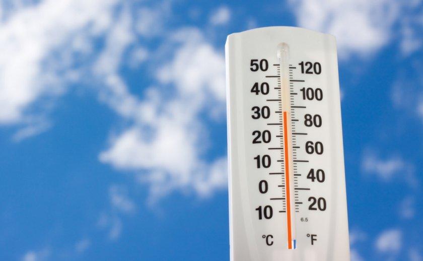 Температура содержания летучей мыши