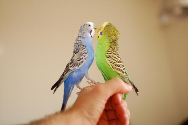 Какие фрукты можно давать попугаю