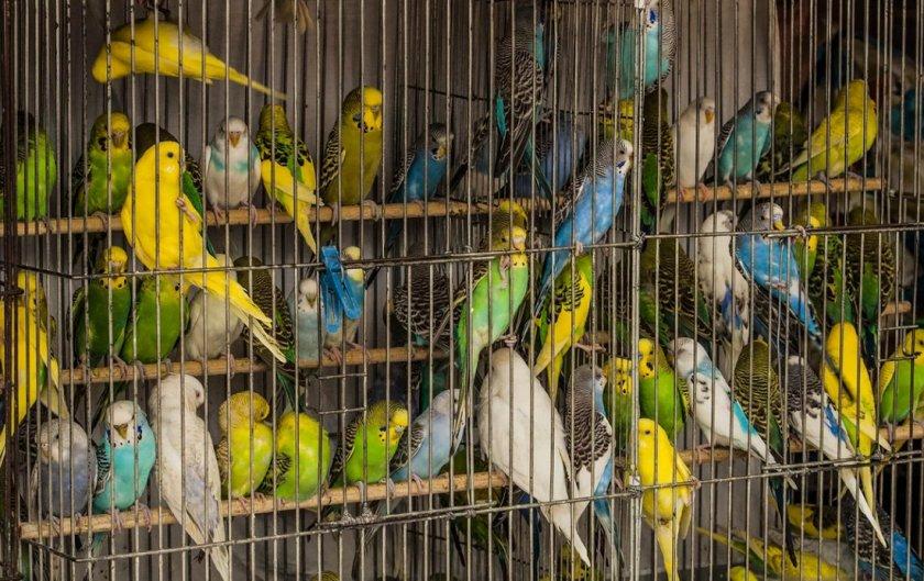 фотки попугаев в клетке красивые