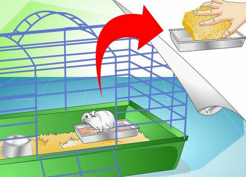 Уборка в клетке хомяка
