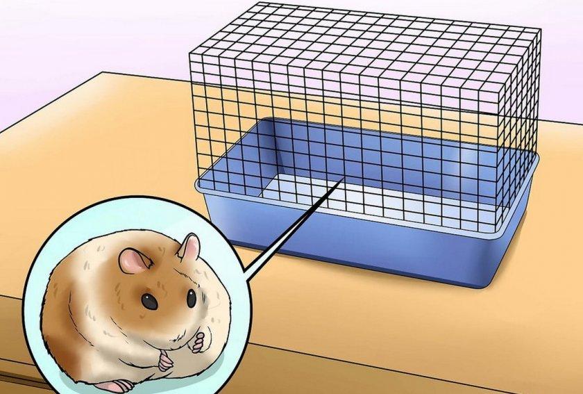 Отдельная клетка для хомяка