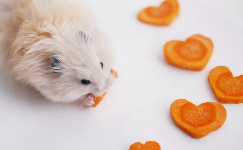 Хомяк и морковь