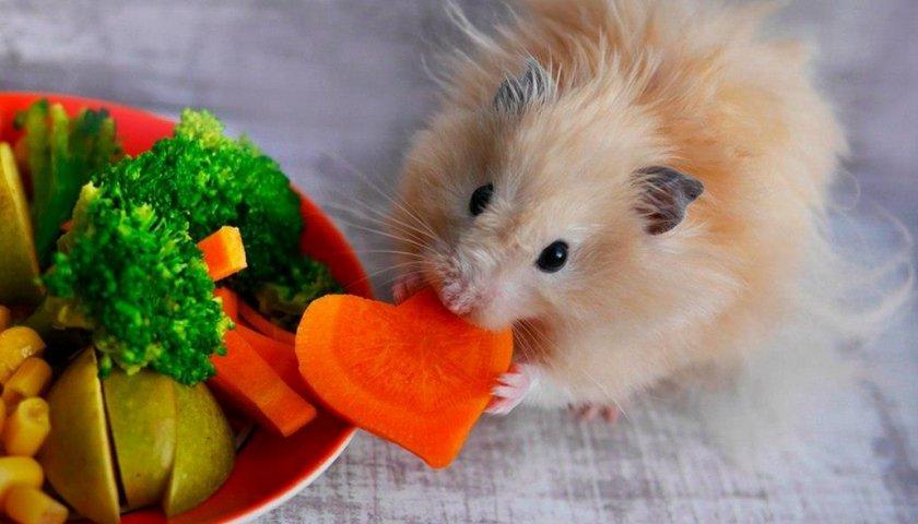 Овощи для хомяка