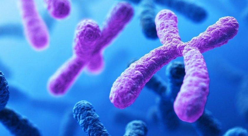 Количество хромосом
