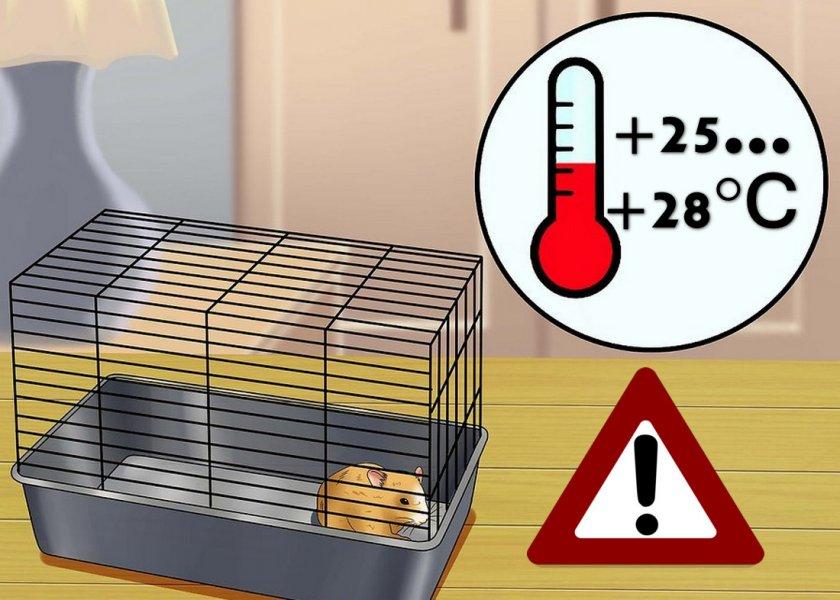 Опасная температура воздуха для хомяков