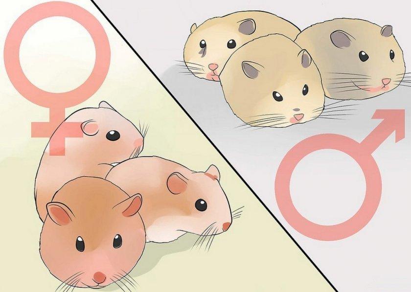 Разделение помёта на самцов и самок