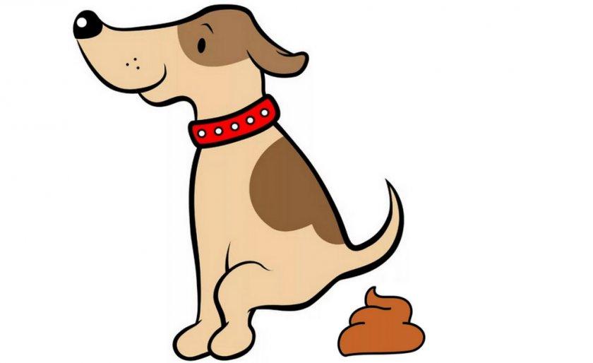 Оранжевый кал у собаки