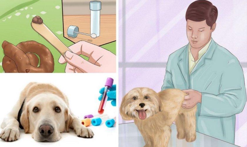 Диагностика болезни у собаки
