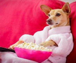 3 идеальных пса для домоседов