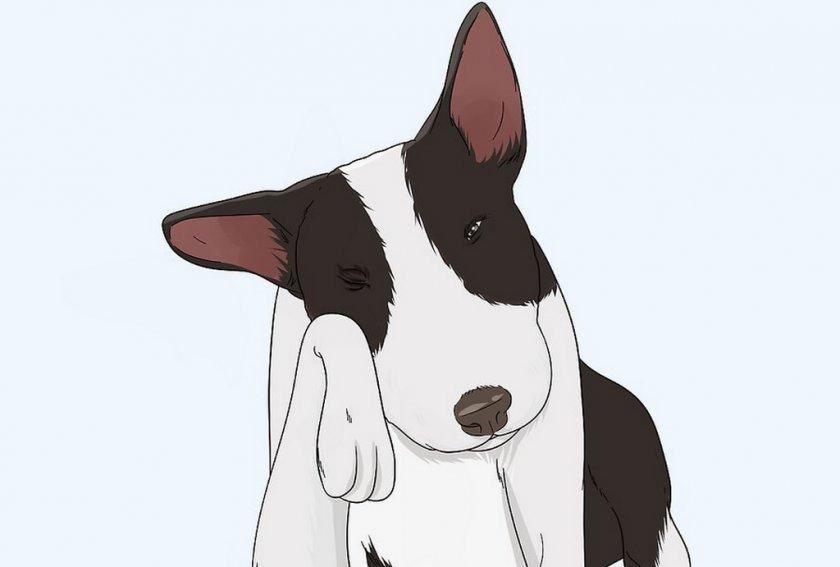 Травма глаза у собаки