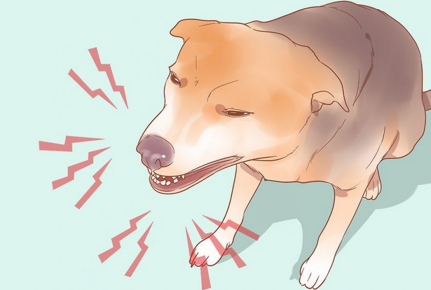 Хрипы у собаки