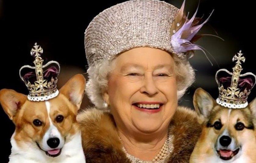 Собаки королевы Британии