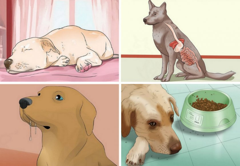 Гипогликемия у собаки