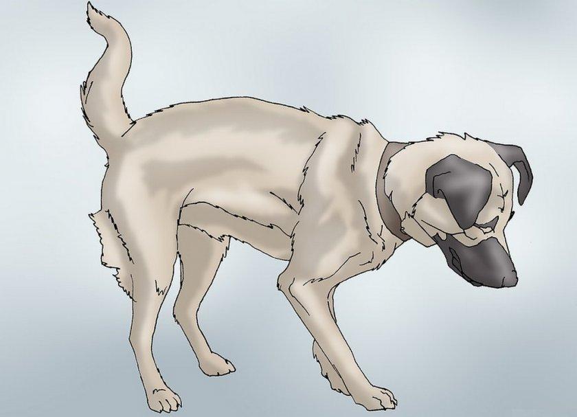 Травма позвоночника у собаки