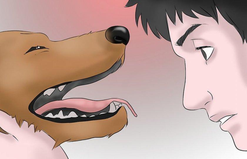 Зубная боль у собаки