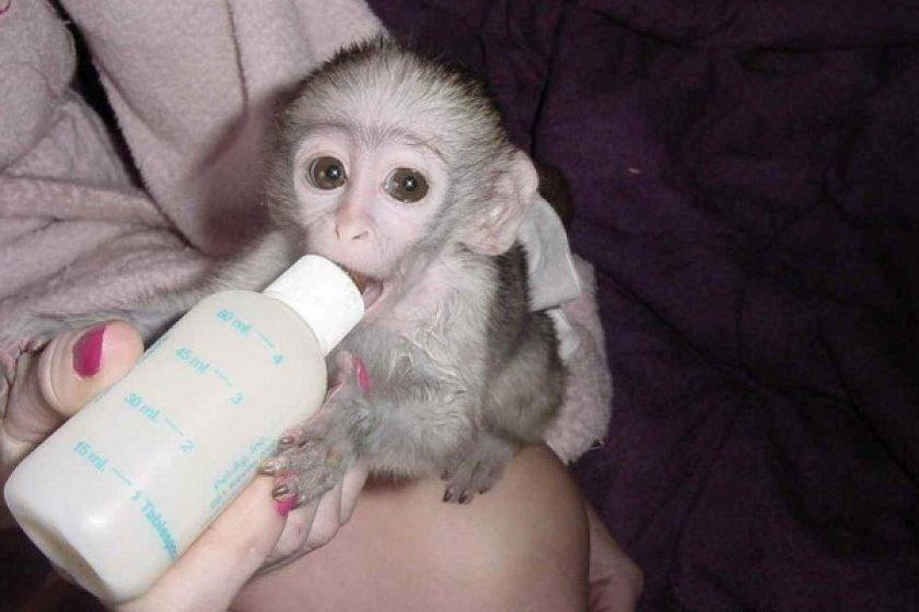 Кормление обезьяны