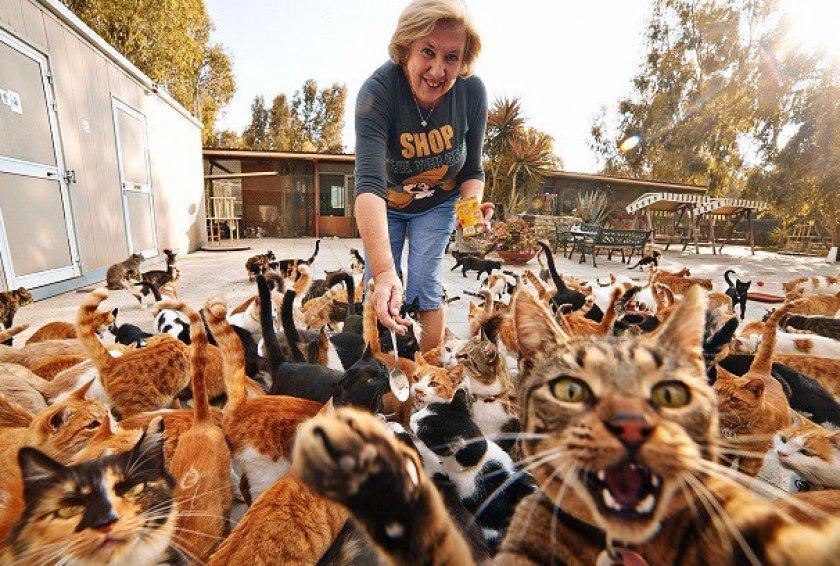 Увеличение популяции кошек