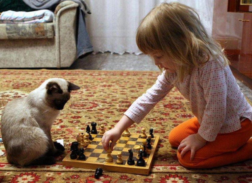 Кот с детьми
