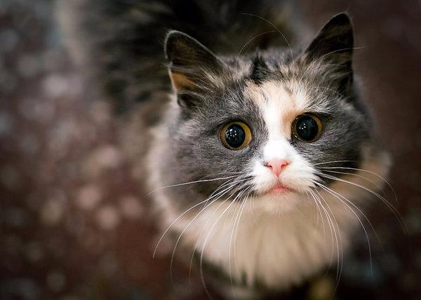 Глисты в глазах у кошек причины пути проникновения лечение и профилактика
