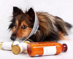 Как вылечить собачий бурсит локтевого сустава