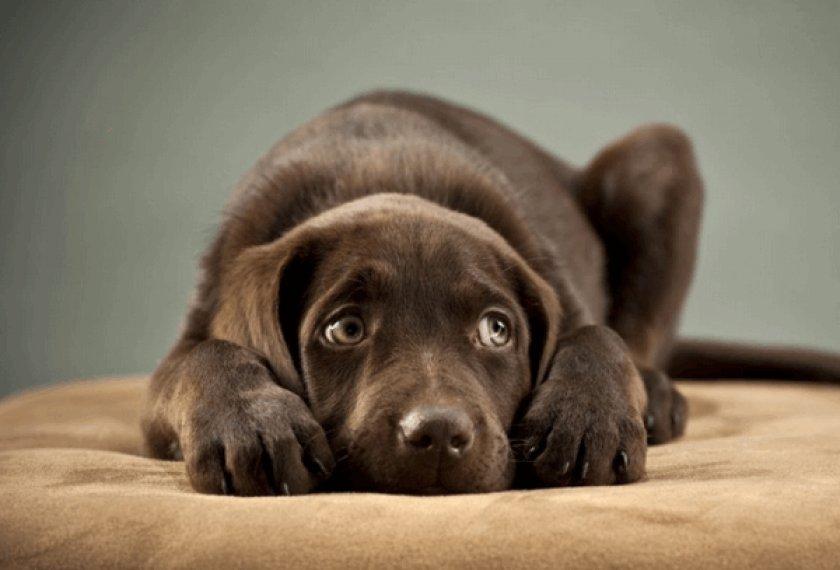 Фобия у собаки